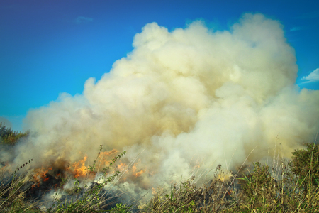 Dry grass burning in the early spring. Burning wood, peat, tragedy and disaster in the field. Background