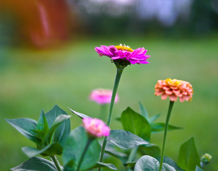 Beautiful multicolored flowers on a blurred background of nature and meadow. Stock Photo for design Stok Fotoğraf