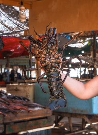 Diverse lobster on the market near the sea, the ocean. Old stalls with fresh marine living crayfish. Asia culture and traditions. Stock photos Stok Fotoğraf