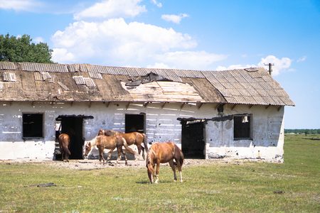 Group of horses near the sacking. sabroshenaya farm with animals. Stock background, photo