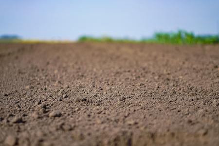 Landscape with agricultural land, in slope, recently plowed and prepared for the crop, with a plantation. summer field. Stock background, photo