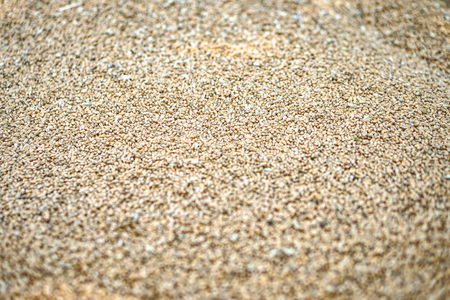 Texture of grains and golden seeds. Wheat and rye as food. Stock background, photo Banque d'images