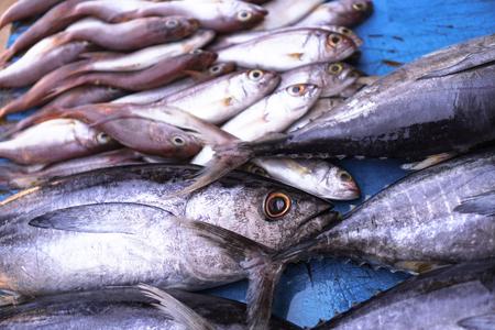 Fischmarkt in Asien. Fang von Meeres- und Meerestieren im Indischen Ozean. Thunfisch in Regalen zu verkaufen. Exotischer Hintergrund