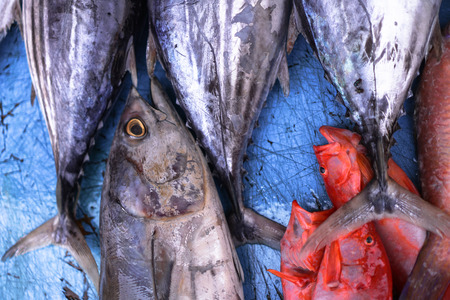 Fish market in Asia. Catching sea and ocean animals in the Indian Ocean. Tuna on shelves for sale. Exotic background Фото со стока