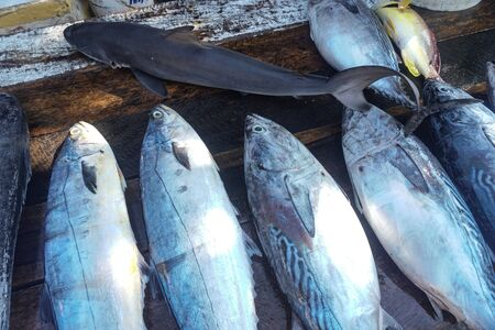 Fish market in Asia. Catching sea and ocean animals in the Indian Ocean. Tuna on shelves for sale. Exotic background Zdjęcie Seryjne