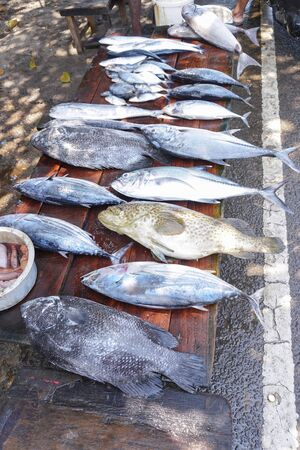 Fish market in Asia. Catching sea and ocean animals in the Indian Ocean. Tuna on shelves for sale. Exotic background Stok Fotoğraf