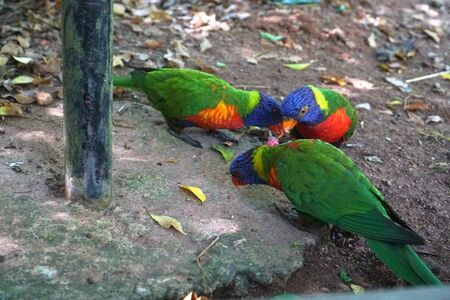 Big talking parrot in the reserve, zoo. Tropical animals in Sri Lanka. Beautiful bird in nature.