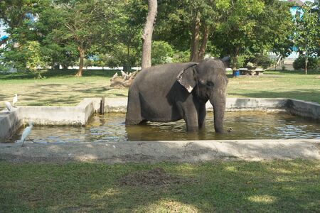 Big elephant in the park zoo. The animal is bathed in water in the reserve. Sri Lanka landscapes. Stock photo