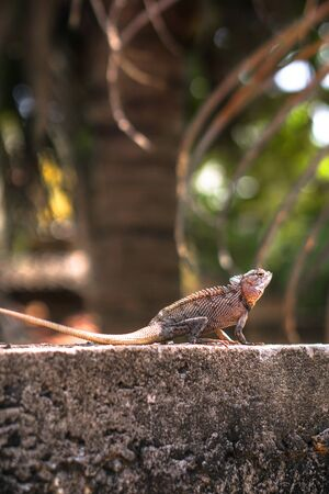 Chameleon on a concrete wall is disguised as an environment. Lizard in Asia is a pet. Stock photo background Foto de archivo - 132107211