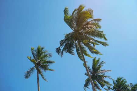 Beautiful exotic tropical palm trees against the sky in the rays of the sun. The theme of travel and holidays in Asia. Stock background Zdjęcie Seryjne