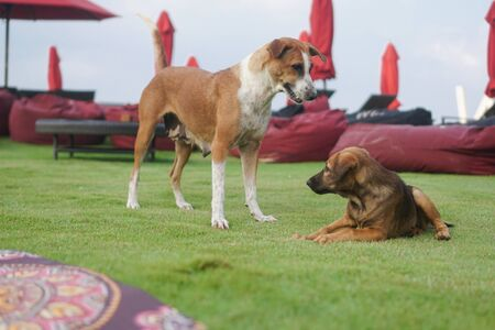 Beautiful dogs on a beautiful lawn play. Puppy runs with his mother outdoors. Pets are walking free. Banco de Imagens