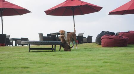 Beautiful dogs on a beautiful lawn play. Puppy runs with his mother outdoors. Pets are walking free. Zdjęcie Seryjne
