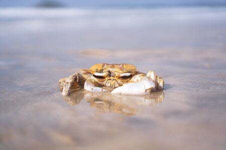 Crab on the beach of the sea is crawling in the sand. Asia and its nature. 写真素材 - 132109278