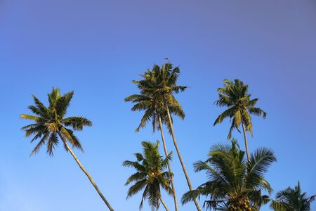 Beautiful exotic tropical palm trees against the sky in the rays of the sun. The theme of travel and holidays in Asia. Stock background Banco de Imagens