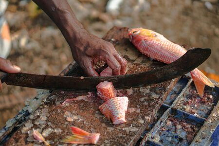 Sliced fish with a knife in the blood. big machete in fishermans hand. Tuna on the market of Sri Lanka. Stock photos 写真素材