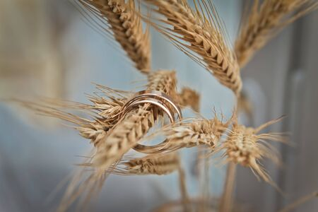 Wedding rings on a branch. Wheat as a symbol of love and family.