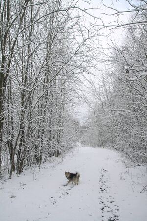 Beautiful pretty pet in a park in a forest in winter after a snowfall. Snowy landscape with a small dog. Christmas and New Year picture for design Stok Fotoğraf