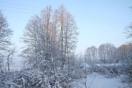 Beautiful winter landscape with snowy trees in the forest. The rays of the sun at sunset or in the morning. Christmas and New Year theme