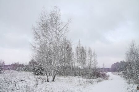 Beautiful winter landscape on a background of trees and forest. Christmas and New Year mood. Snowfall and the view as in a fairy tale