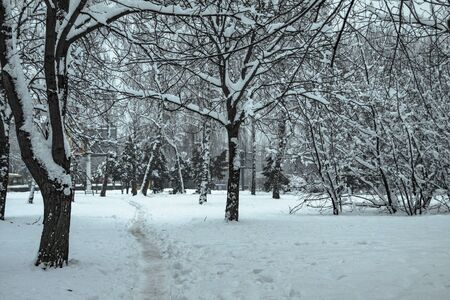 Beautiful winter landscape in the forest. Road outside the city and snowfall. Snowdrifts in the park and uncleaned street. Christmas and New Year background