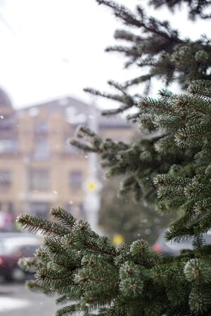Christmas tree branches on a background of snowfall in the city. Christmas and New Year mood