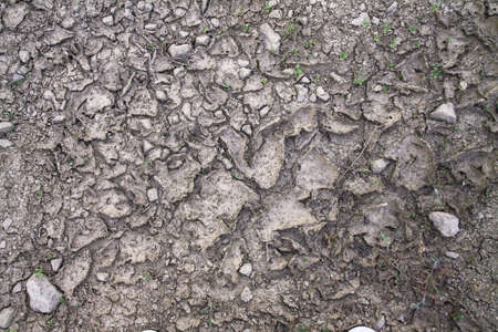 Texture of the dried loose earth and sand. Background for design. 免版税图像