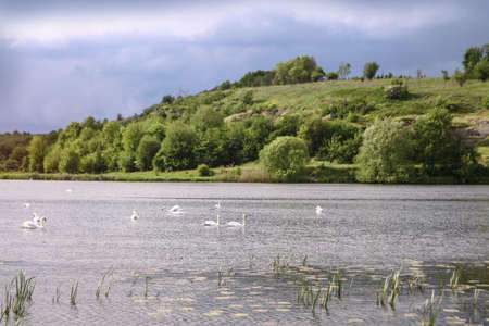 Landscape with a beautiful river and swans on a background of hills. Lake in the ecological zone in europe. Stock image for design. Banco de Imagens