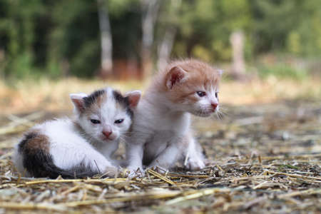 Newborn cats play in nature. A kitten at a young age for the first time in nature without a mother. Beautiful stock background for design. 免版税图像