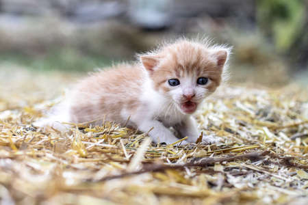 Newborn cats play in nature. A kitten at a young age for the first time in nature without a mother. Beautiful stock background for design. Banco de Imagens