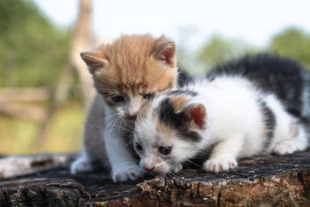 Newborn cats play in nature. A kitten at a young age for the first time in nature without a mother. Beautiful stock background for design. Фото со стока