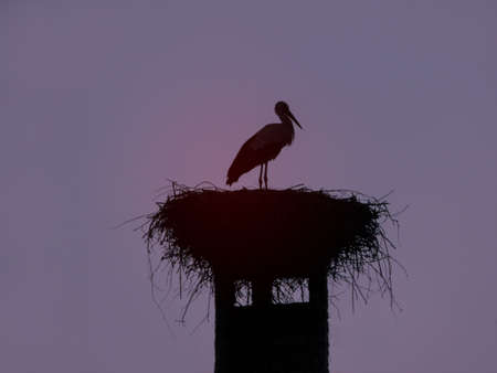 Stork is a big beautiful bird sitting in a nest. Nature near the village in the summer. Stock photo background
