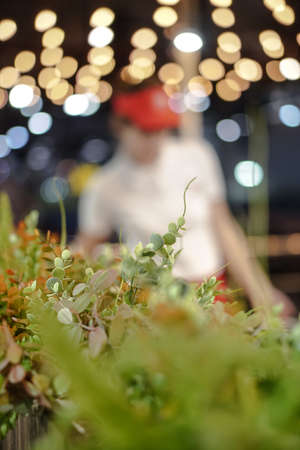 Decorative plants in a cafe or restaurant. Flowerpot on a background of beautiful bokeh. Stock photo for design. 免版税图像