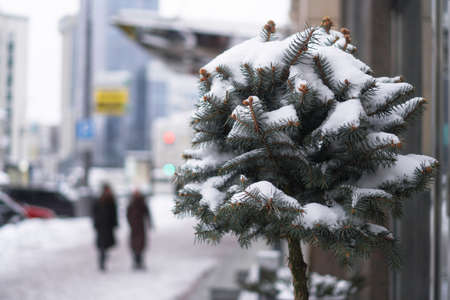 Beautiful little tree in the snow against the backdrop of the city and skyscrapers. Winter city landscape. Stock Christmas background.