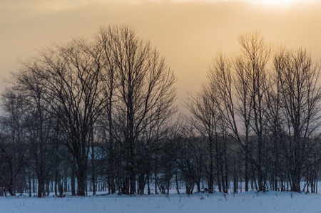 fenceline: Row of deciduous trees at sunset while its snowing