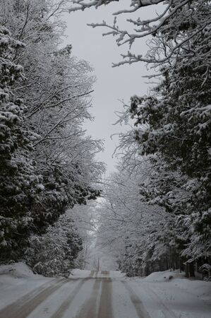 laden: Snow laden conifers and deciduous trees line the snowy road.