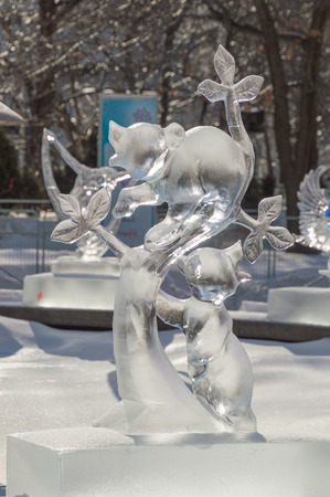 raccoons: Ice sculpture in Ottawa, on a sunny day with ice covered trees behind. Ice scupltrure is of two raccoons climbing a small tree