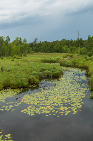 Lush landscape of swampy river with lily pads and dark sky Фото со стока