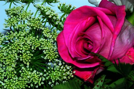 rose arrangement Stok Fotoğraf