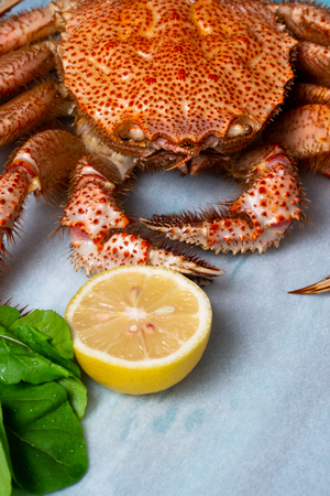 Whole boiled crab with lemon and greens. Horsehair crab. Vertical Standard-Bild - 117117599
