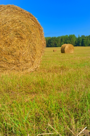 after harvesting in the field hay braided in boulders Stock Photo