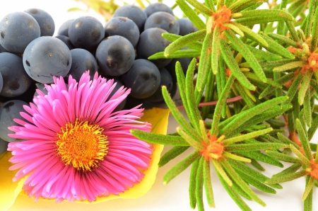 Still life of a flower, bunch of grapes, fragrant rosemary