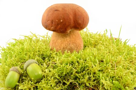 Edible mushroom and acorns in the moss close up isolated on white background Stock Photo - 15778247