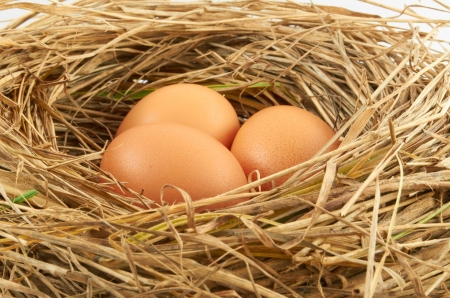 Three brown chicken eggs in a straw nest
