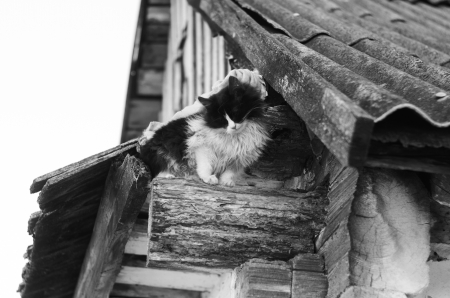 Homeless cat on the roof of the old wooden house