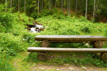 Wooden bench in a thick pine forest