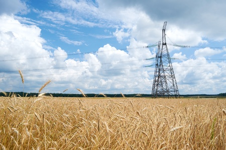 Power line in a wheat field summer day Stock Photo