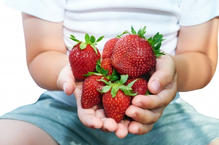 Strawberries in hands of the child
