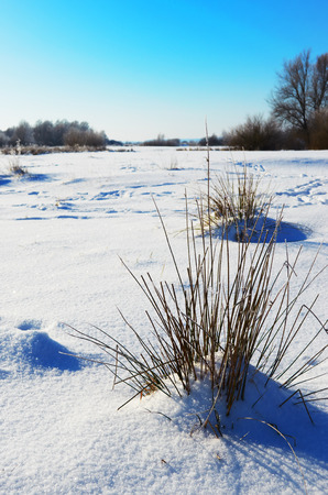 Snowy meadow in  clear frosty morning Stock Photo
