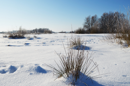 Snowy meadow in  clear frosty morning photo
