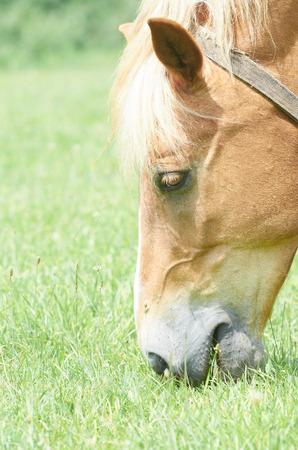 horse head closeup Stock Photo